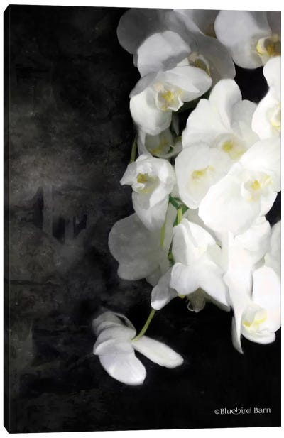 Contemporary White Orchids Canvas Art Print
