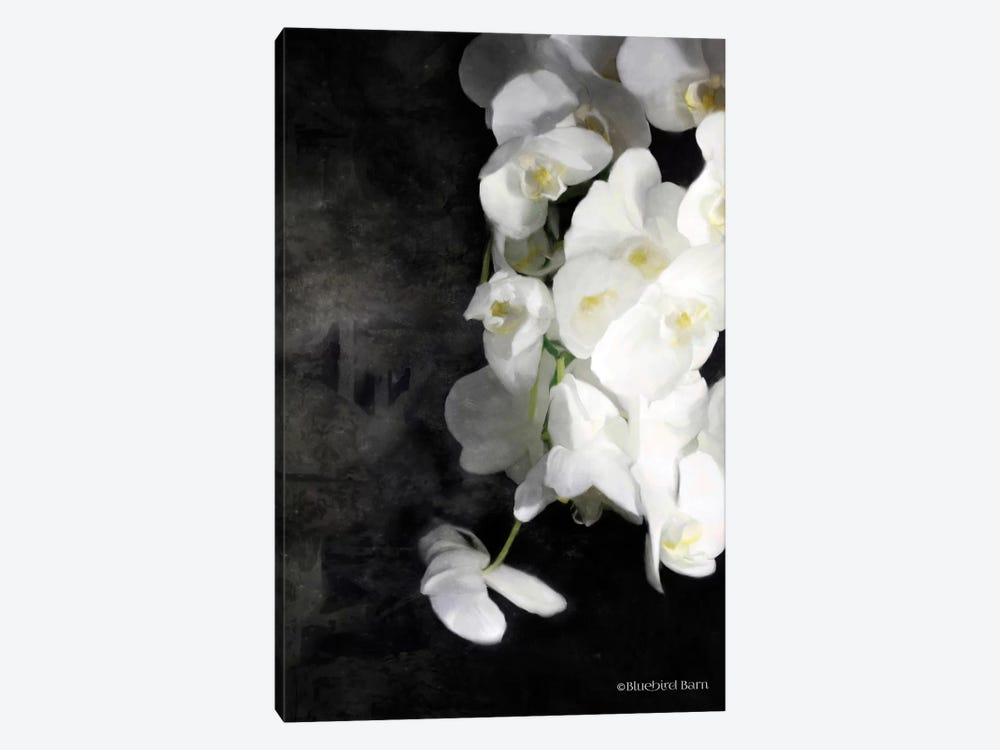 Contemporary White Orchids by Bluebird Barn 1-piece Canvas Print