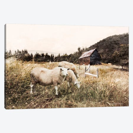 Sheep In The Meadow Canvas Print #BLB270} by Bluebird Barn Art Print