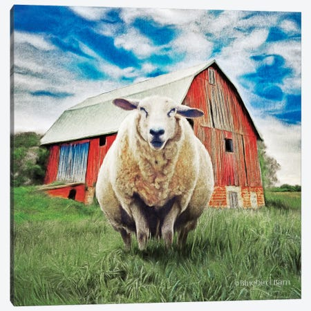 Sunday Afternoon Sheep Pose Canvas Print #BLB272} by Bluebird Barn Canvas Print