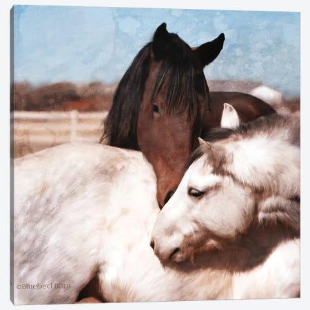 White And Chestnut Horses Canvas Print #BLB274} by Bluebird Barn Canvas Wall Art