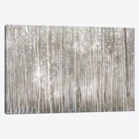 Birch Trees     Canvas Print #BLB276} by Bluebird Barn Canvas Artwork