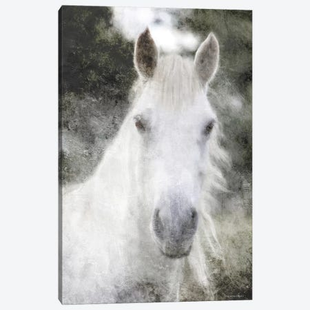 White Horse Mystique Canvas Print #BLB283} by Bluebird Barn Canvas Art