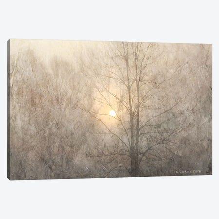 Fading Trees Sunlight Canvas Print #BLB32} by Bluebird Barn Canvas Wall Art