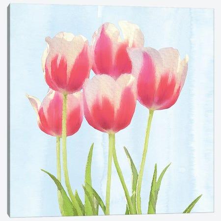 Fresh Spring Tulips III Canvas Print #BLB37} by Bluebird Barn Art Print