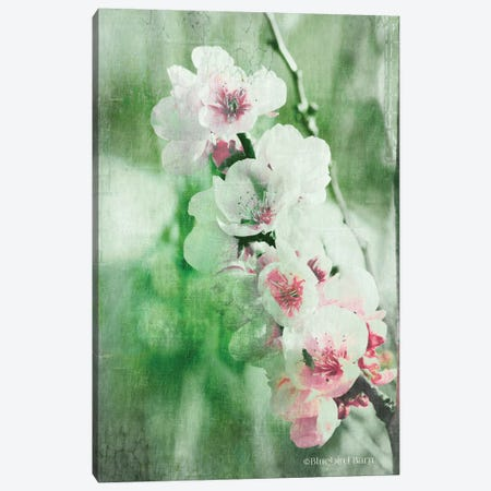 Green and Pink Blossom Burst Canvas Print #BLB41} by Bluebird Barn Art Print