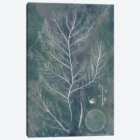 Lacy Sea Kelp Canvas Print #BLB47} by Bluebird Barn Canvas Art