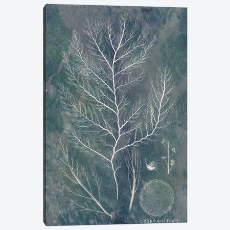 Lacy Sea Kelp 3-Piece Canvas #BLB47} by Bluebird Barn Canvas Art