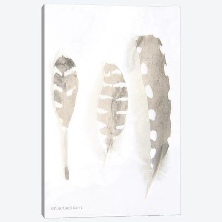 Neutral Feathers Study    Canvas Print #BLB64} by Bluebird Barn Canvas Artwork