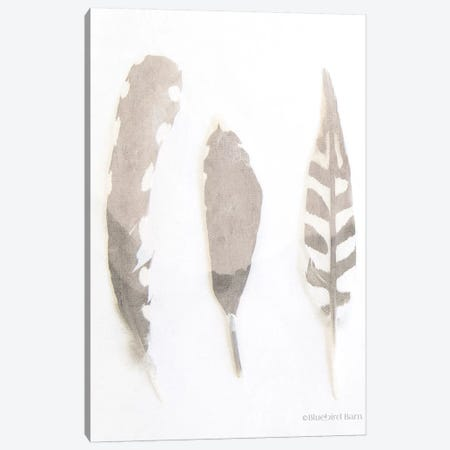 Soft Feathers Study     Canvas Print #BLB85} by Bluebird Barn Canvas Wall Art