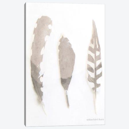 Soft Feathers Study     Canvas Print #BLB85} by Bluebird Barn Canvas Wall Art