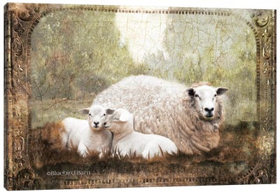 Vintage Ewe and Sleeping Lambs Canvas Art Print