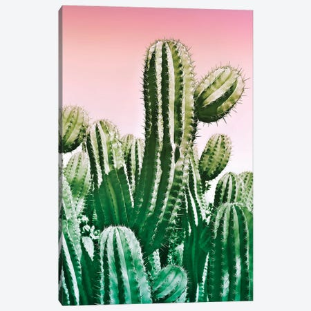 Wild Cactus From The Desert 3-Piece Canvas #BLI107} by Beli Canvas Art Print