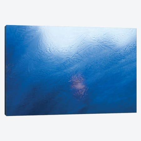 Winter Ice Canvas Print #BLI110} by Beli Art Print