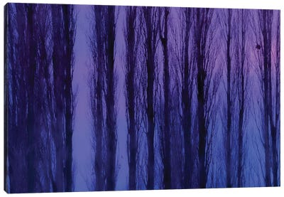 Abstract Winter Trees Canvas Art Print