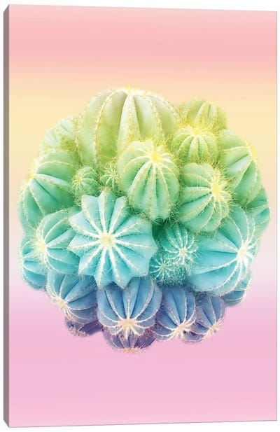 Amazing Cactus And Colorful Shades Canvas Art Print