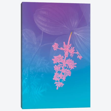 Vibrant Tropical Flower Canvas Print #BLI139} by Beli Canvas Print