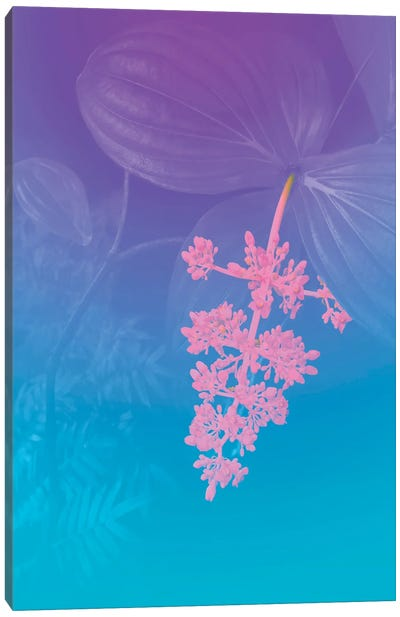Vibrant Tropical Flower Canvas Art Print