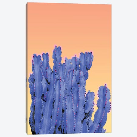 Blue Cactus Canvas Print #BLI18} by Beli Canvas Print