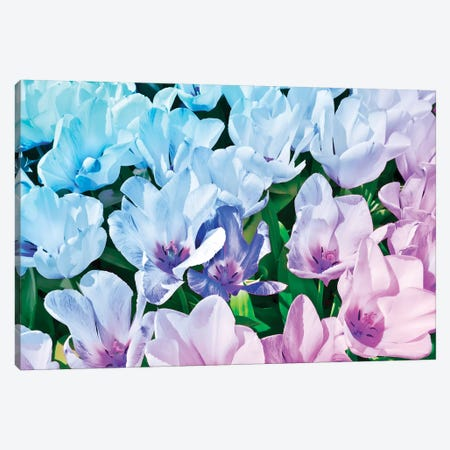 Blue Indigo Tulips 3-Piece Canvas #BLI20} by Beli Canvas Wall Art