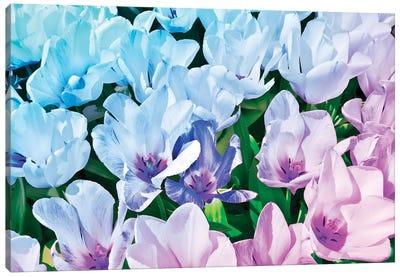 Blue Indigo Tulips Canvas Art Print