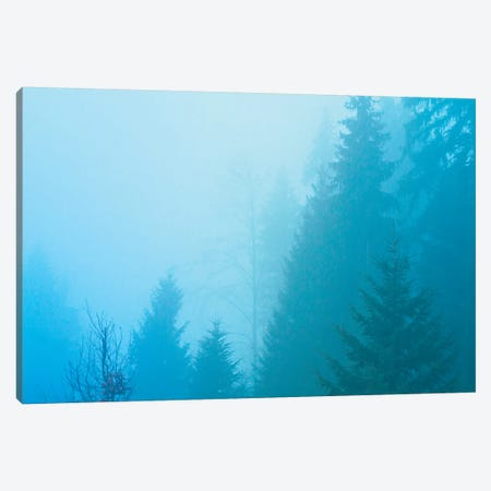 Forest Mist Canvas Print #BLI36} by Beli Canvas Wall Art