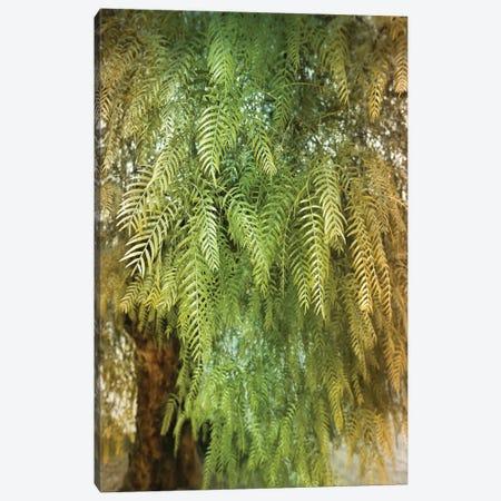 Green Tree Canvas Print #BLI44} by Beli Canvas Art Print