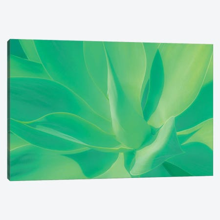 Aloe Vera Plant Canvas Print #BLI6} by Beli Canvas Wall Art