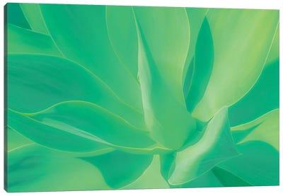 Aloe Vera Plant Canvas Art Print