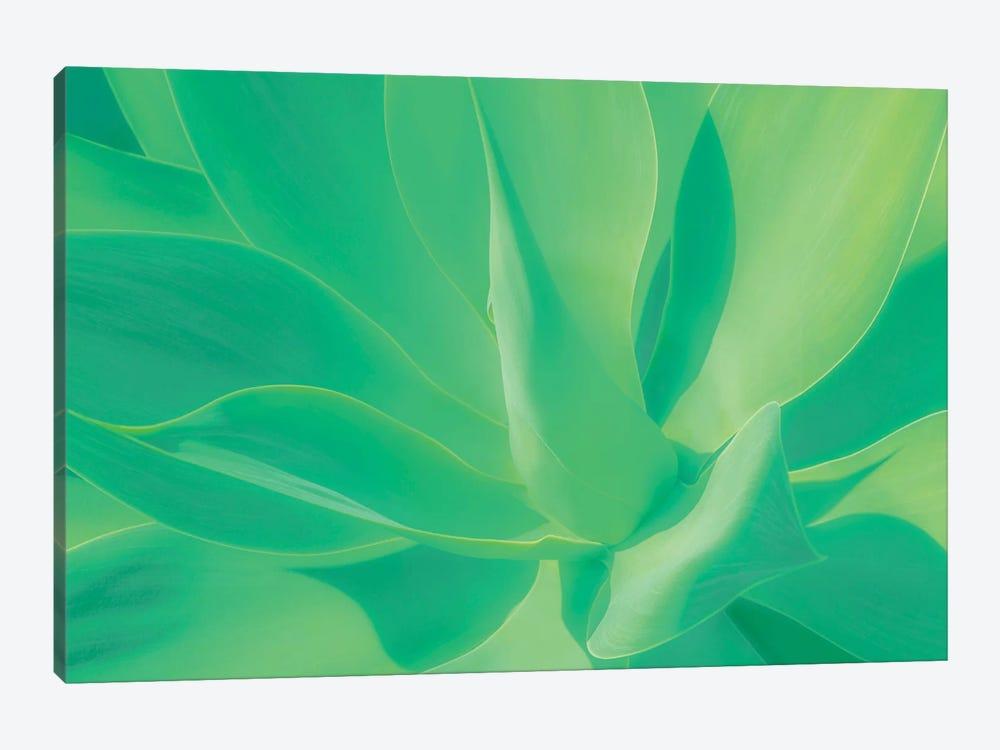 Aloe Vera Plant by Beli 1-piece Canvas Art