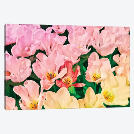 Pink Tulips 3-Piece Canvas #BLI73} by Beli Art Print