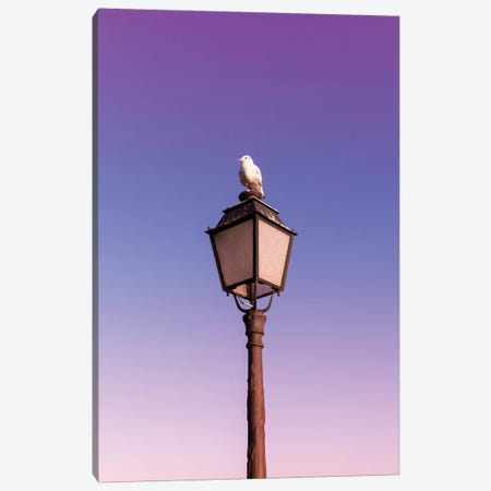 Seagull Canvas Print #BLI84} by Beli Canvas Print