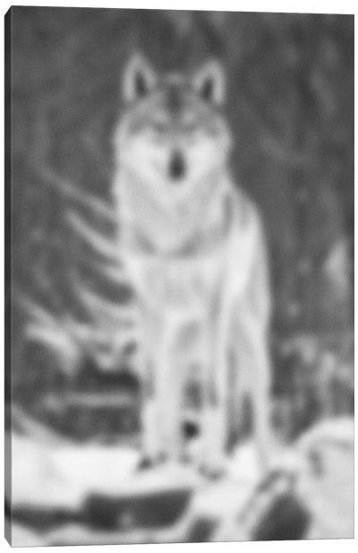 Blurred Désert Canvas Art Print