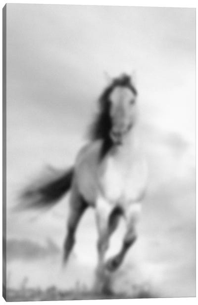 Blurred Étalon Canvas Art Print