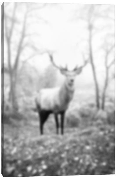 Blurred Le Cerf Canvas Art Print