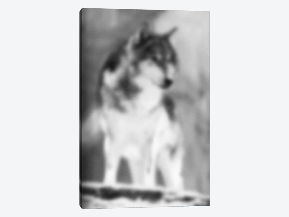 Blurred Loup by 5by5collective 1-piece Canvas Artwork