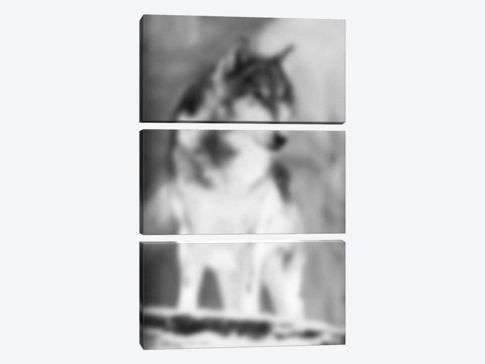 Blurred Loup by 5by5collective 3-piece Canvas Art