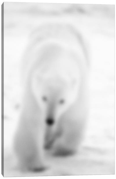 Blurred Blanc Canvas Art Print