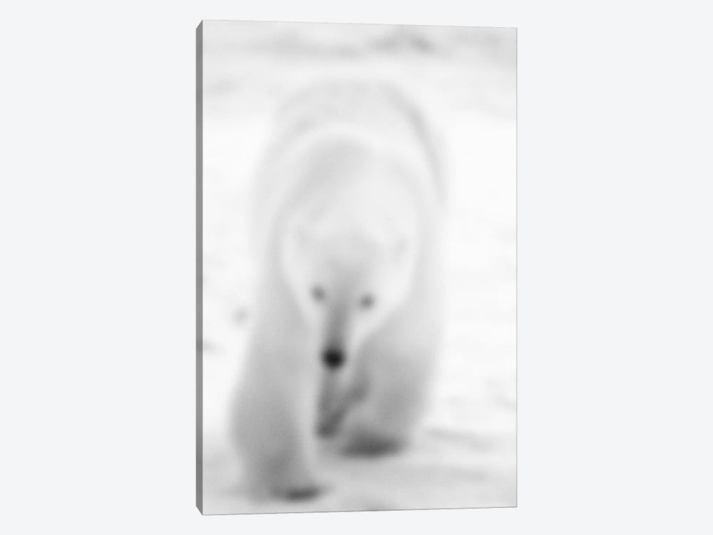 Blurred Blanc by 5by5collective 1-piece Canvas Wall Art