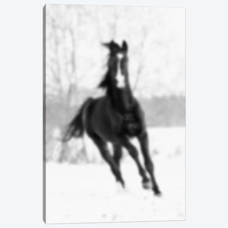 Blurred Cheval Canvas Print #BLM6} by 5by5collective Canvas Wall Art