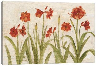 Row of Red Amaryllis Light Canvas Art Print
