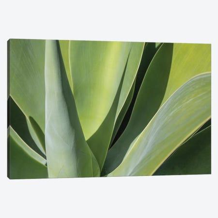Aloe I Canvas Print #BMA1} by Barbara Markoff Canvas Artwork
