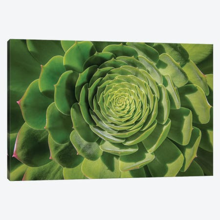 Green Succulent Spiral Canvas Print #BMA3} by Barbara Markoff Canvas Art
