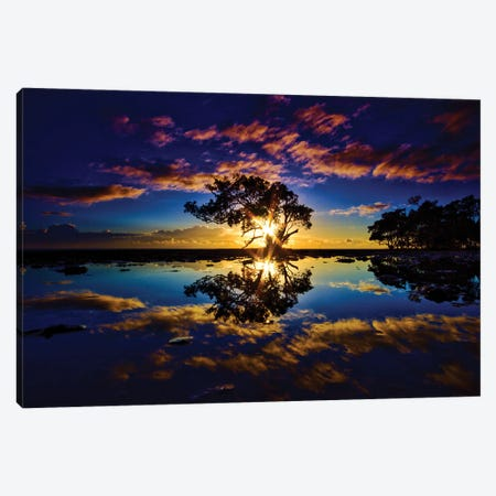 Tree In The Water Canvas Print #BML55} by Ben Mulder Canvas Artwork