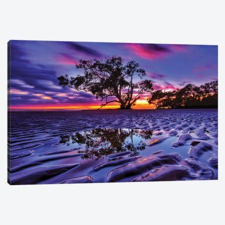 Tree In The Sand Canvas Print #BML90} by Ben Mulder Canvas Print