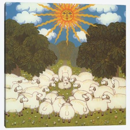 Sheep III Canvas Print #BMN10007} by Ditz Canvas Wall Art