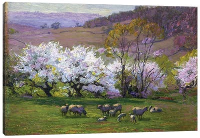 Blossom Time,  Canvas Art Print