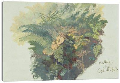 A Study of Ferns, Citivella, 1842,  Canvas Art Print