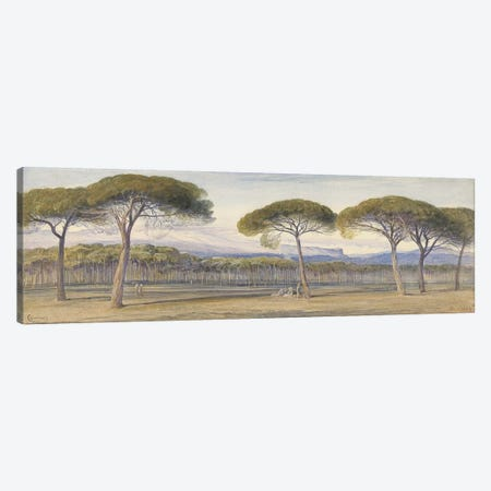 A View of the Pine Woods Above Cannes, 1869  Canvas Print #BMN10122} by Edward Lear Canvas Artwork