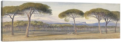 A View of the Pine Woods Above Cannes, 1869  Canvas Art Print